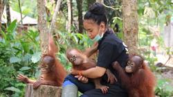 Borneo - Orang-Utan