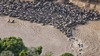 Afrika - Masai-Mara