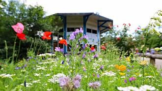 Blühende Gärten für Wildbiene & Co.
